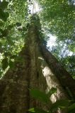 Saladero Rainforest Trail, Piedras Blancas National Park, Costa Rica