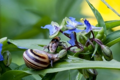 Snail and Bee on Spiderwort