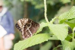 Butterfly Garden,