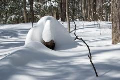 Snow Log