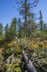 Chebogue Meadows Wildlife Forest, Yarmouth, NS