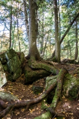 Cedar Roots (trail to High Falls)