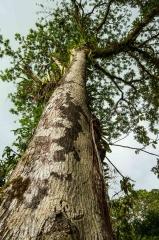 gc-trees-4