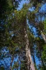 Abraham Lake Nature Reserve, Nova Scotia