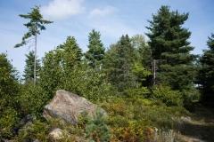 Pine Forest , New Elm , Nova Scotia
