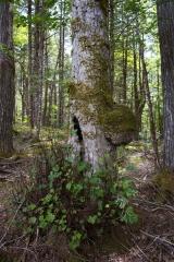 Knox Conservation, Molega Lake, Nova Scotia