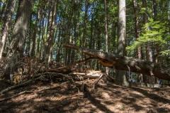 Kentville Agri Forest, NS, 2014
