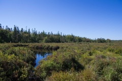 Chebogue Meadows Wildlife Forest, Yarmouth, N. S.