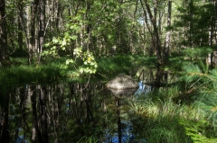 Knox Conservation, Molega Lake, NS,