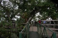 Canopy Tower - Napo River, Ecuador