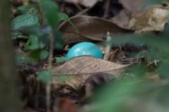 Unidentified Egg