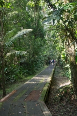 Walk to Sani Lodge - Napo River, Ecuador