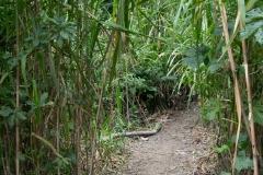 Path to Sani Lodge - Napo River, Ecuador