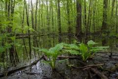 Backus Woods, May 16, 2009
