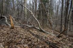 Backus Woods, Nov. 05, 2016