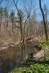 Backus Woods, May 07, 2007