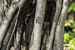 Backus Woods, May 19, 2014