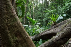 Saladero Rainforest Trail, Piedras Blancas National Park, Costa Rica