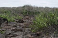 Lava Rock Path - Espanola, Galapagos Islands