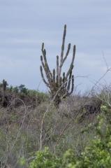 Floreana, Galapagos Islands