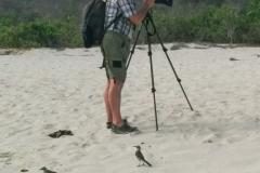 Galapagos Mockingbird - Espanola, Galapagos Islands