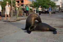 Sea Lion - Galapagos Islands, San Cristobal