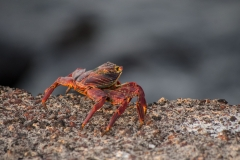 Sally Lightfoot - Galapagos Islands, San Cristobal