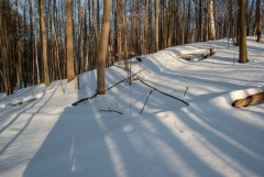 Happy Valley Forest, King Township, Ontario