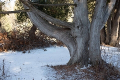 William-Granger Greenway – Humber Trail
