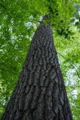 Gault Nature Reserve, Mount St. Hilaire, Quebec
