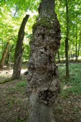 Beckett Ancient Forest, Sherbrooke, Que.