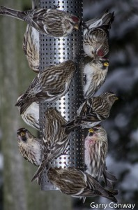 Bird Feeder Photos